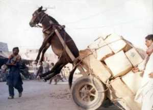 OL-Donkey-Cart